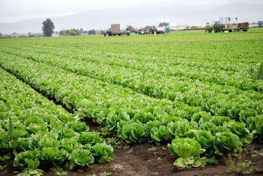 環境保全のために有機農法