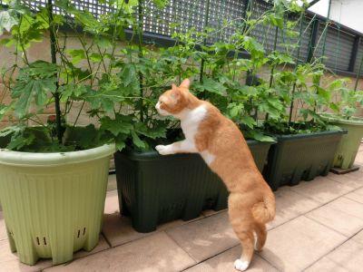 ベランダ菜園で種から野菜を簡単栽培!これであなたもベランダー!
