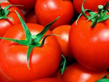 新鮮なトマトの見分け方