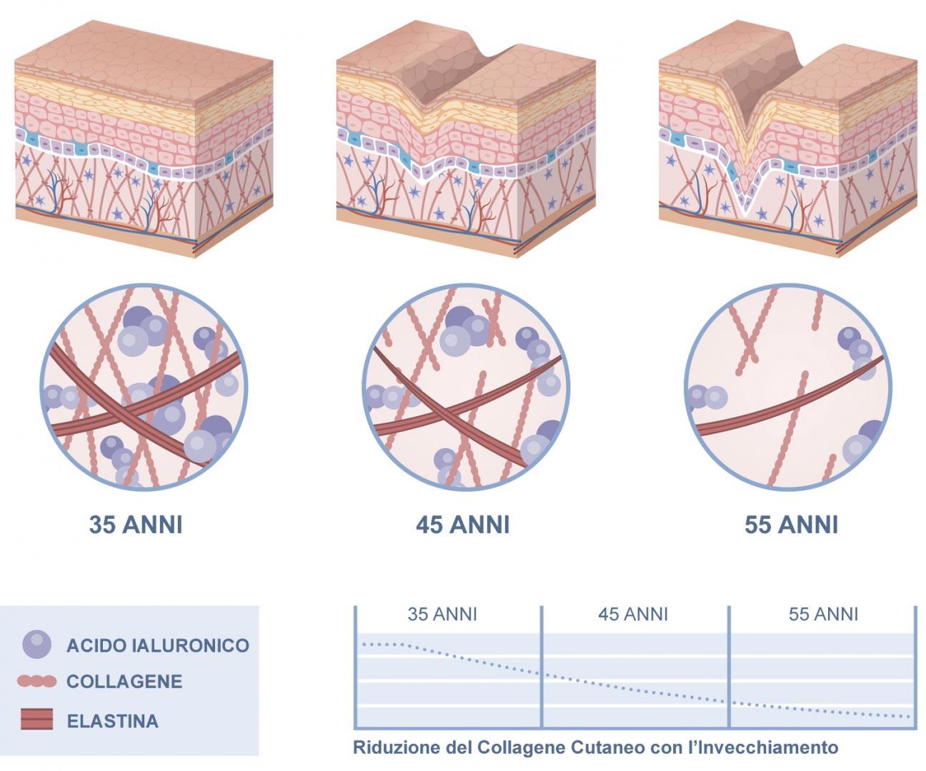 Collagene Invecchiamento