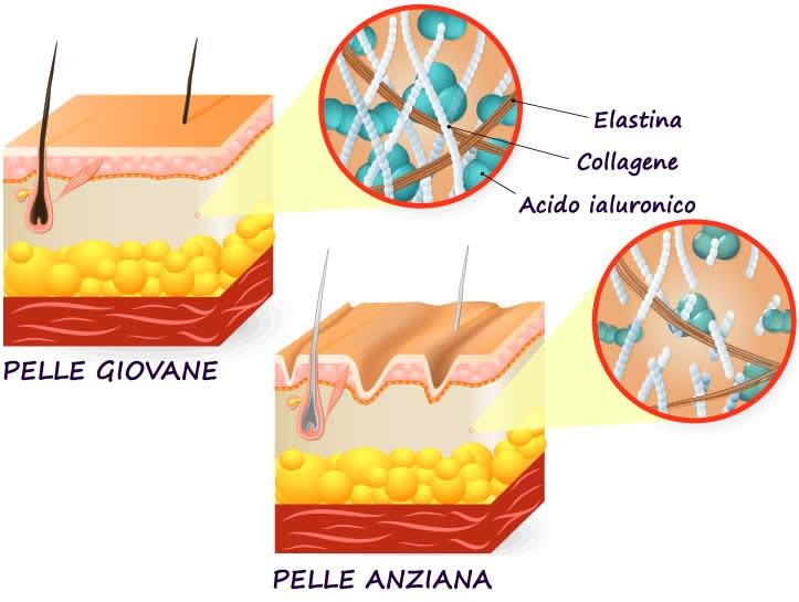 Collagene Pelle