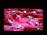 Fascinante oeuvre, à la fois attractive et rebutante, Calf Red snake.