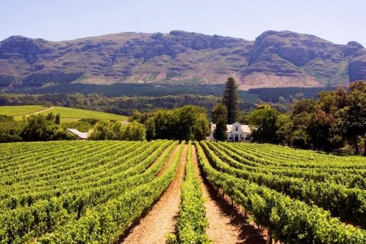 Vista sui vigneti e le montagne di Stellenbosch.