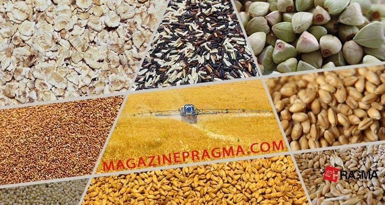 Nella nostra alimentazione ogni giorno sono presenti cereali diversi dal grano, anche bio e integrali. Ecco una guida ai cereali per dieta