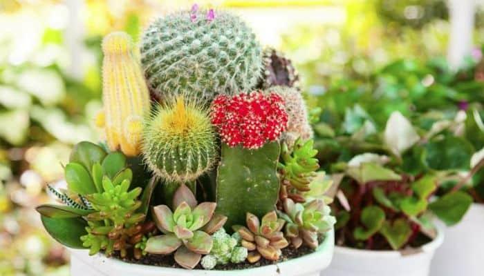 Piante facili da tenere e curare in casa per matricole del pollice verde - Piante da tenere in casa ...