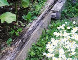 Gradina in august – un fel de rezumat