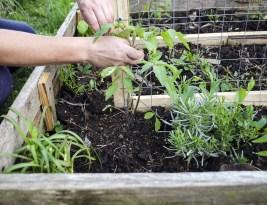 Grădinăreasa care poate să facă orice vrea