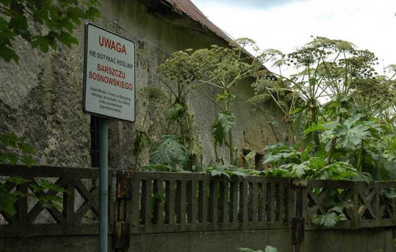 Parzący problem na Dolnym Śląsku