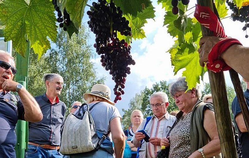 Mieszkańcy gminy z wizytą na zielonogórskim Winobraniu