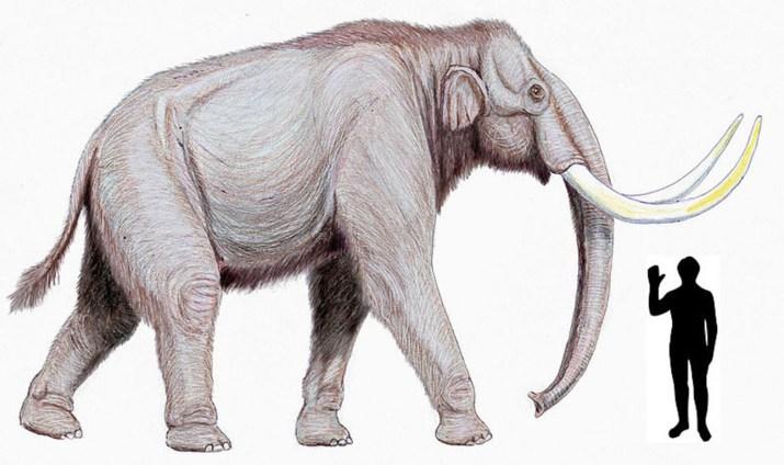 mamuty01