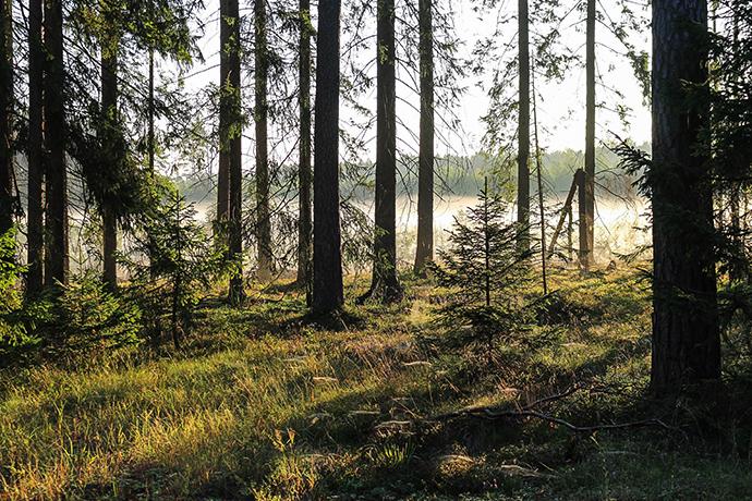 Najciekawsze lasy w Polsce - Puszcza Piska