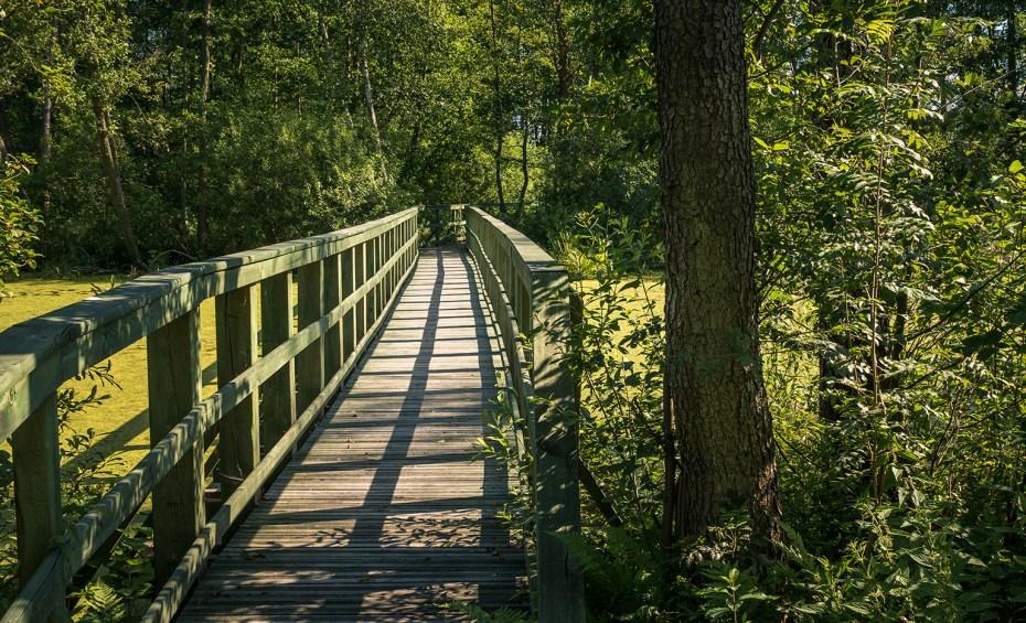 Miejsca na spacer w okolicy Warszawy - Mazowiecki Park Krajobrazowy
