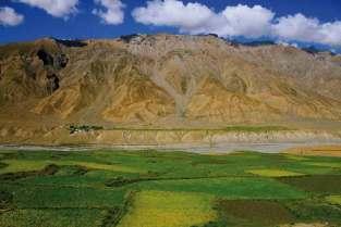 Wiosną nawet w surowym krajobrazie Ladakhu, w dolinach rzek i na nawadnianych polach, pojawiają się roślinne kobierce.