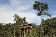Domy na słupach w koronach drzew buduje wiele papuaskich plemion