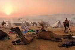 W Indiach, podobnie jak w północnej Afryce, odporne na brak wody, silne i wytrzymałe wielbłądy służą jako środek transportu również współcześnie. Zwłaszcza mieszkańcom Rajastanu i Gudżaratu. Ba, w tamtejszych miastach można je nawet zostawiać na parkingach, płacąc za postój określoną w cenniku stawkę.