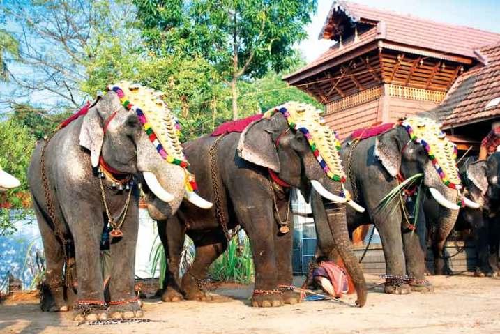 Bogato udekorowane słonie są nieodłącznym elementem ceremonii religijnych