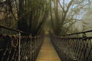 Tajemnicze mosty łączą ze sobą domy na drzewach – Vythiri