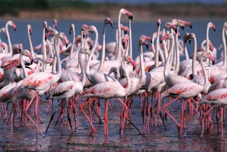 Na wyspie żyje około czterech tysięcy flamingów