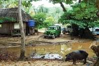 Mokradła oddzielające od dżungli plaże wokół Baracoa