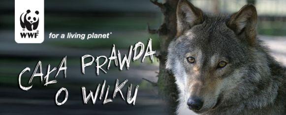 Chrońmy wilki