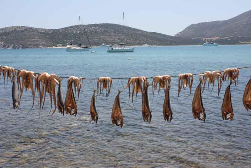 poulpes