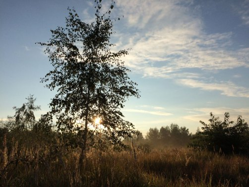 Leśne klimaty w Falenicy, zaledwie 12 km od centrum stolicy, fot. Paweł Wroński