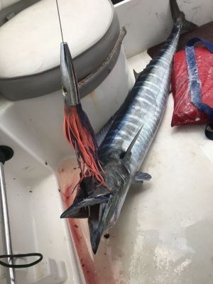 Catching Wahoo on El Cohete Lure