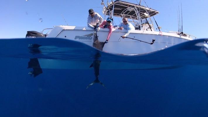 Mag Bay Marlin Fishing Lure