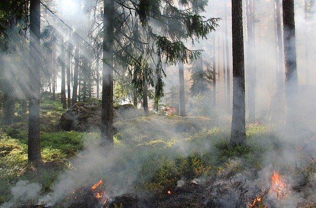 Entzündungen sind wie ein schwelender Waldbrand und unser Immunsystem läuft dauerhaft auf Hochtouren.
