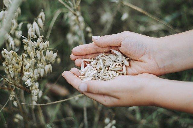 Landwirtschaft machte es den Menschen möglich, sesshaft zu werden.