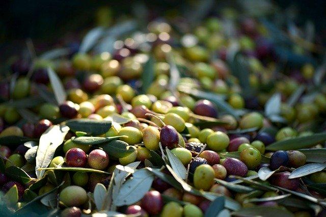 Oliven sind fette Früchte, die gesunde Fette enthalten.