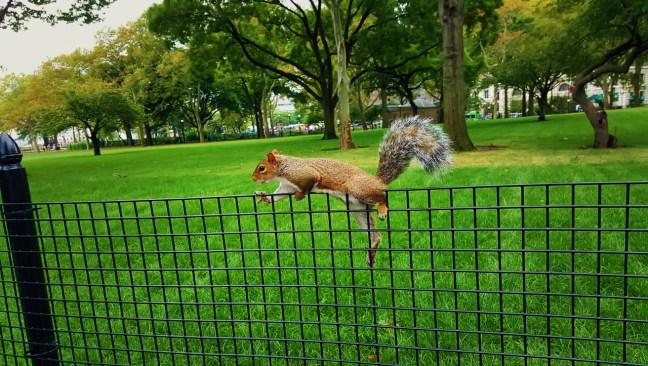 Eichhörnchenstrategie-10-Bewegung-Gesundheit