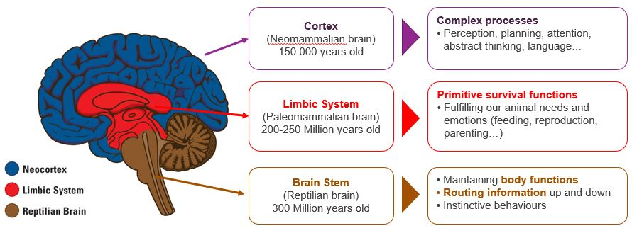 Triune Brain - Introduction in the Neuroscience of Stress – The Rider and Elephant Metaphor