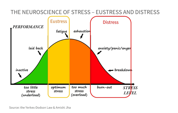 image 5 - The good side and the dark side of stress. The neuroscience behind it and its impact on our cognitive performance.