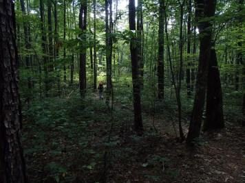 shady trail, but no views!