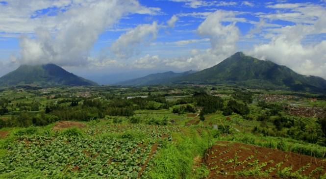 Wisata Gunung Andong dan Hutan Mangli