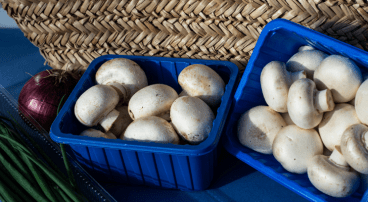 Deksel doosje champignons
