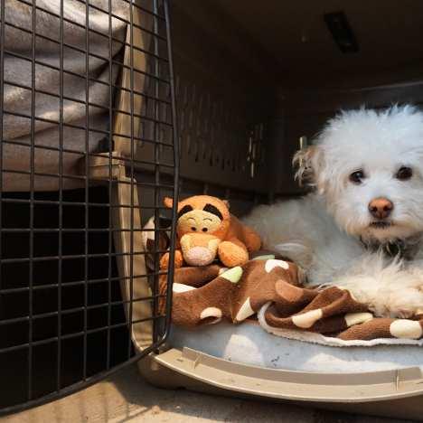 Maggie's Puppy Bowl