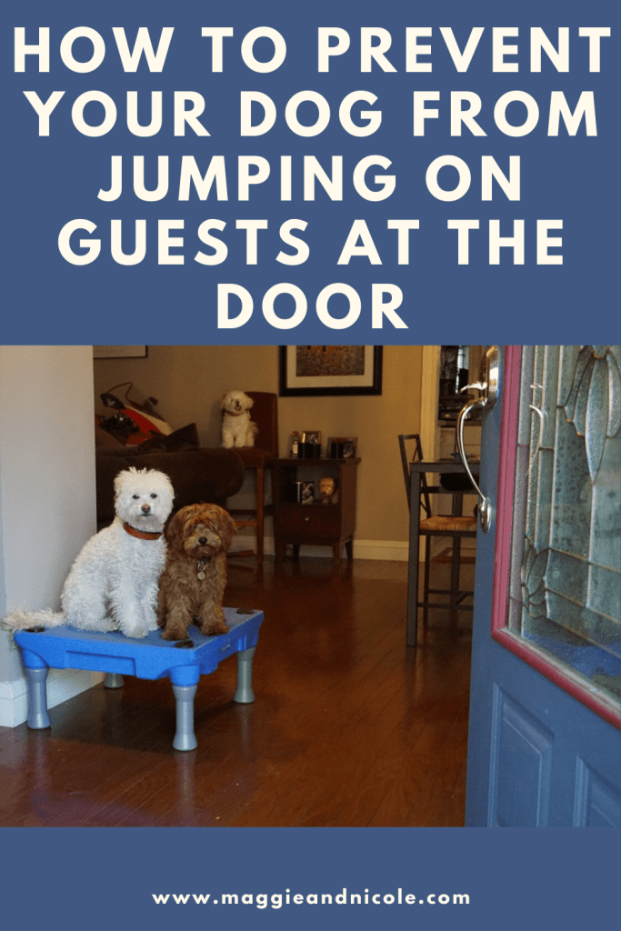 How to prevent your dog from jumping on you at the door