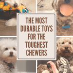 Dog toys for heavy and tough chewers