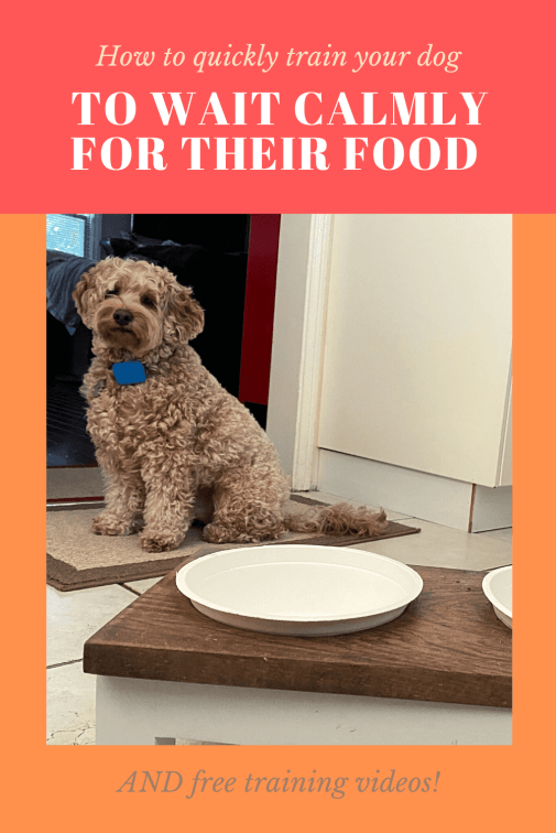 How to teach a dog to wait for food