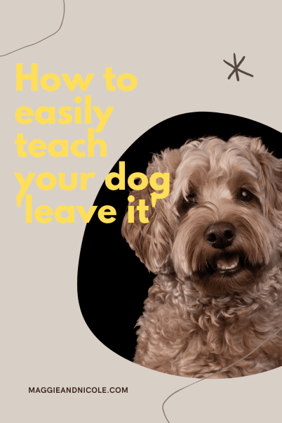 how to teach your dog leave it