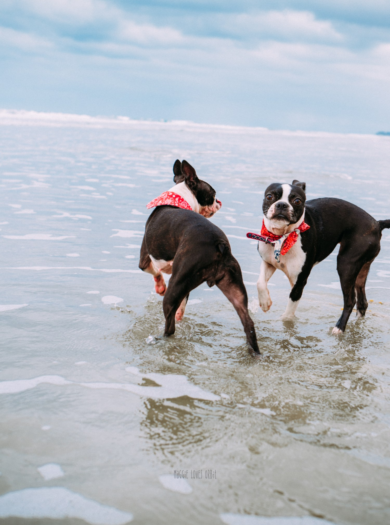 Best Dog Beaches in San Diego