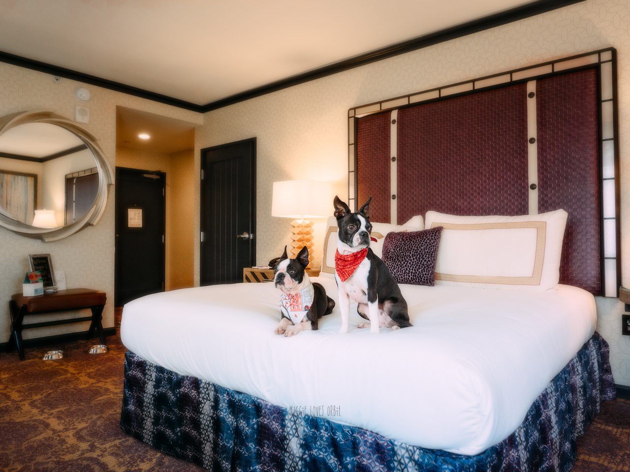 Pet Friendly Rooms Hotel Solemar