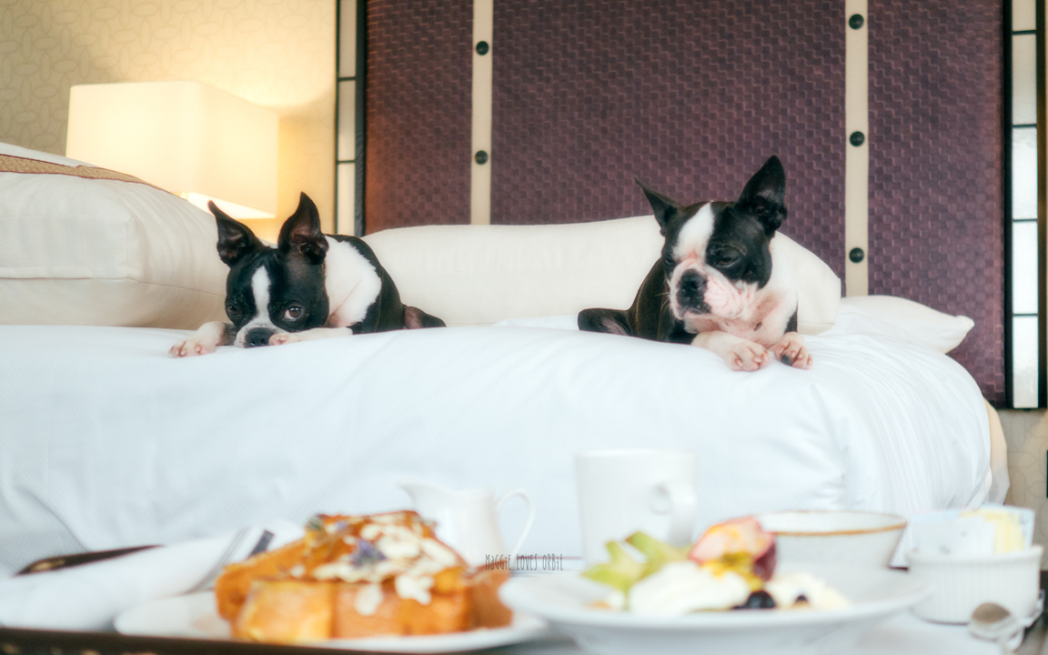 Breakfast in bed amazing french toast while staying at the dog friendly hotel san diego ca Hotel Solemar