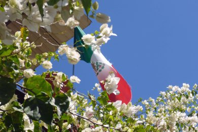Mexican Flag flies above the bougainvillea