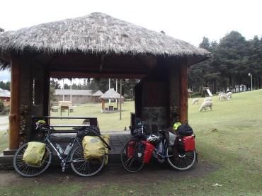 Camping with llamas in El Boliche