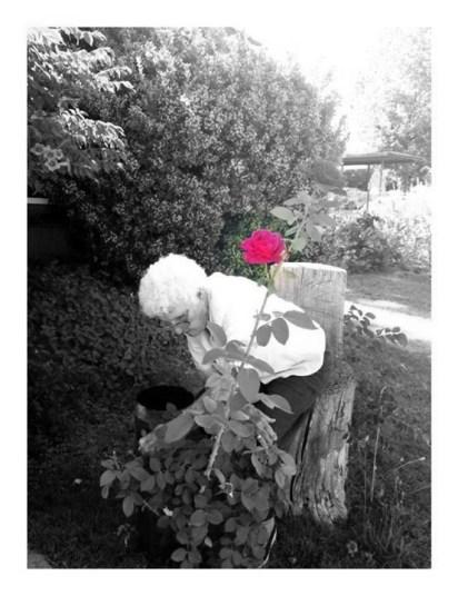 Irene has always had Roses.