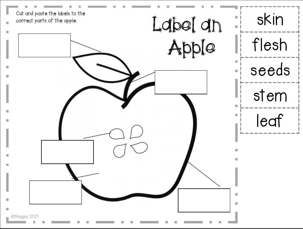 Parts Of An Apple Worksheet