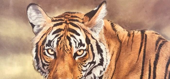 Tiger, zweiter Versuch